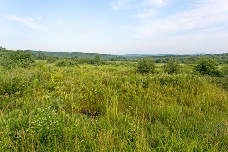 Large area of rural vacant land with green trees and brush